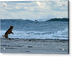 Acrylic Print featuring the photograph Some Timing by Greg Graham