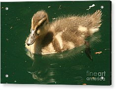 Someone Following Me  Acrylic Print by Linda Walker