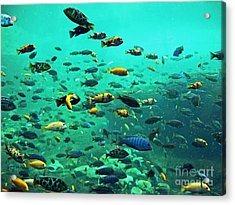 Something Fishy Acrylic Print by Kevin Fortier