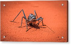 Something To Bug You - Armored Katydid Photograph Acrylic Print