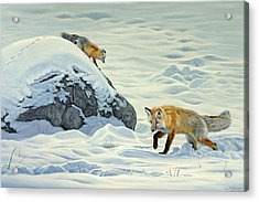 Something Under The Snow Acrylic Print