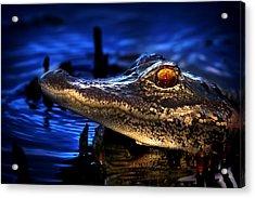 Son Of A Gator Acrylic Print by Mark Andrew Thomas