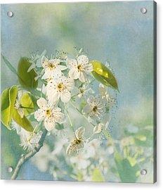 Song Of Spring Acrylic Print by Kim Hojnacki