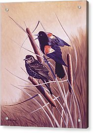 Song Of The Marsh Acrylic Print