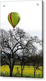Sonoma Hot Air Balloon Over Mustard Field Acrylic Print by Sciandra