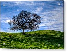 Sonoma Tree Acrylic Print by Chris Austin