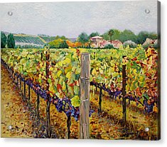 Sonoma Vineyard Acrylic Print by Ron Aucutt
