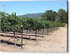 Sonoma Vineyards In The Sonoma California Wine Country 5d24492 Acrylic Print by Wingsdomain Art and Photography