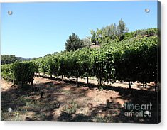 Sonoma Vineyards In The Sonoma California Wine Country 5d24499 Acrylic Print by Wingsdomain Art and Photography