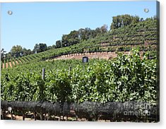 Sonoma Vineyards In The Sonoma California Wine Country 5d24503 Acrylic Print by Wingsdomain Art and Photography