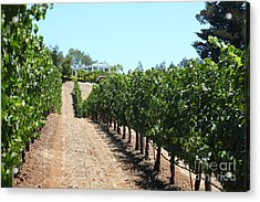 Sonoma Vineyards In The Sonoma California Wine Country 5d24507 Acrylic Print by Wingsdomain Art and Photography