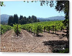 Sonoma Vineyards In The Sonoma California Wine Country 5d24511 Acrylic Print by Wingsdomain Art and Photography