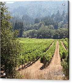Sonoma Vineyards In The Sonoma California Wine Country 5d24515 Square Acrylic Print by Wingsdomain Art and Photography