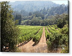 Sonoma Vineyards In The Sonoma California Wine Country 5d24515 Acrylic Print by Wingsdomain Art and Photography