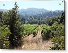 Sonoma Vineyards In The Sonoma California Wine Country 5d24516 Acrylic Print by Wingsdomain Art and Photography