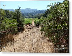 Sonoma Vineyards In The Sonoma California Wine Country 5d24520 Acrylic Print by Wingsdomain Art and Photography