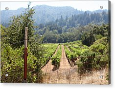 Sonoma Vineyards In The Sonoma California Wine Country 5d24521 Acrylic Print by Wingsdomain Art and Photography