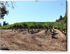 Sonoma Vineyards In The Sonoma California Wine Country 5d24597 Acrylic Print by Wingsdomain Art and Photography