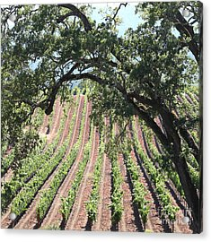 Sonoma Vineyards In The Sonoma California Wine Country 5d24619 Square Acrylic Print by Wingsdomain Art and Photography