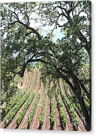Sonoma Vineyards In The Sonoma California Wine Country 5d24619 Vertical Acrylic Print