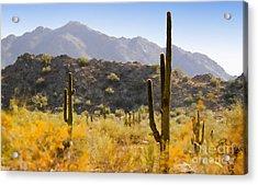 Sonoran Desert Beauty Acrylic Print by Betty LaRue