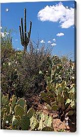 Sonoran Desert Spring Acrylic Print by Joe Kozlowski