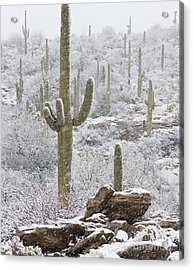 Sonoran Snowfall Acrylic Print by Timm Chapman