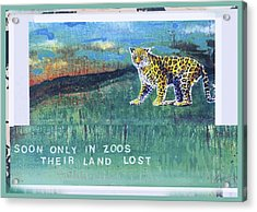 Soon Only In Zoos  Their Land Lost Acrylic Print by Mary Ann  Leitch
