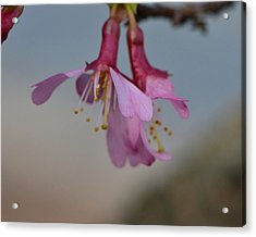 Soon Spring Acrylic Print by Larry Bishop