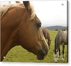 Acrylic Print featuring the photograph Sorrel Horse Profile by Belinda Greb