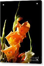Acrylic Print featuring the photograph Sorry by Paul Foutz