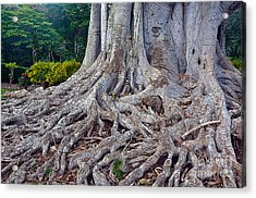 Acrylic Print featuring the photograph Soul Roots by Gina Savage