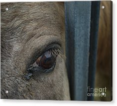Acrylic Print featuring the photograph Soul Searching Eyes by Peter Piatt