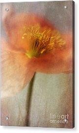 Soulful Poppy Acrylic Print by Priska Wettstein