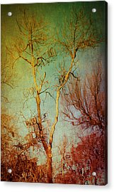 Souls Of Trees Acrylic Print