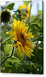 Acrylic Print featuring the photograph Soulshine No.2 by Neal Eslinger