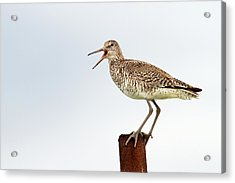 Sounds Of Nature Acrylic Print