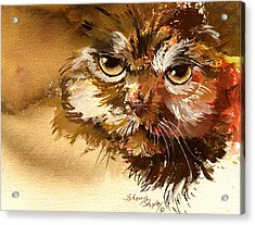 Sour Puss Acrylic Print by Sherry Shipley
