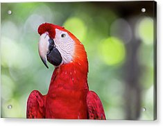 South America, Brazil, Amazon, Manaus Acrylic Print