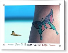 South Beach Wild Life Acrylic Print by Mike McGlothlen