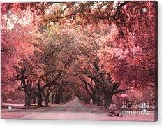 South Carolina Angel Oak Trees Nature Landscape Acrylic Print by Kathy Fornal