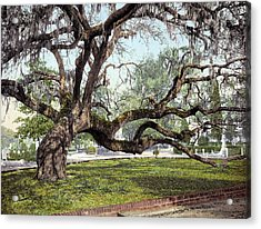 South Carolina Live Oak Acrylic Print