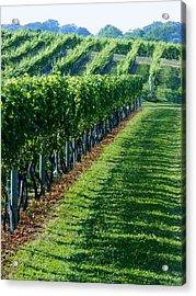 South Fork Vineyard Acrylic Print by John Wartman