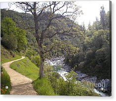 South Yuba Trail Acrylic Print by Rachel Lowry