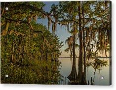 Southern Beauty  Acrylic Print