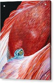 Southern Comfort Flamingo Acrylic Print