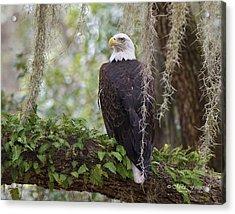 Southern Eagle Acrylic Print