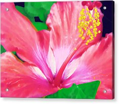 Acrylic Print featuring the photograph Southern Hibiscus by Diane Miller