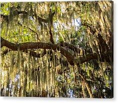 Southern Live Oak And Spanish Moss Acrylic Print