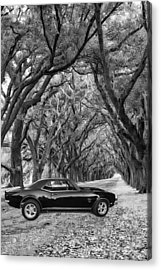Southern Muscle Acrylic Print by Steve Harrington